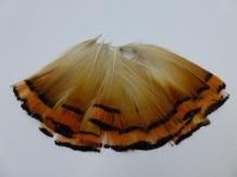 A&M Pheasant Feathers