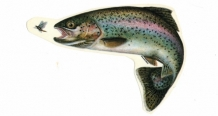 "Sticker "" Rainbow Trout "" Klein"
